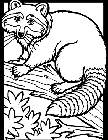 raccoon tune coloring pages - photo#11